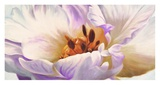 Tulipe Print by Luca Villa