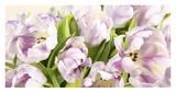 Tulipes en Fleur Poster by Luca Villa