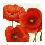 Poppies I Prints by Luca Villa