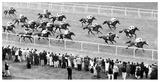 Horse Racing, Newbury, Britain Reprodukcje autor Robert Hallam