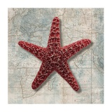 Starfish Art by Ted Broome