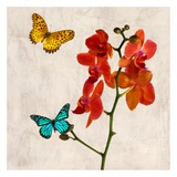Orchids & Butterflies II Posters by Teo Rizzardi