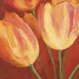 Orange Tulips II Print on Canvas by Silvia Mei