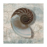 Nautilus Prints by Ted Broome