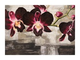 Velvet Orchids Posters by Shin Mills