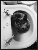 Cat Sitting In Bathroom Sink Framed Photographic Print by Natalie Fobes