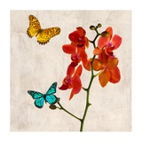 Orchids & Butterflies II Poster by Teo Rizzardi