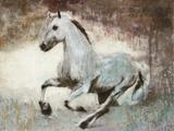White Star Print on Canvas by Dario Moschetta
