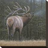 Broken Silence - Elk Stretched Canvas Print by Daniel Smith
