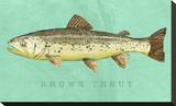 Brown Trout Stretched Canvas Print by John Golden