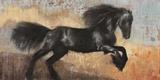 Black Stallion Print on Canvas by Dario Moschetta
