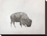 Buffalo (left) Stretched Canvas Print by Jacqueline Neuwirth
