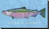 Chinook Salmon Stretched Canvas Print by John Golden