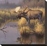 Bull Moose Stretched Canvas Print by Greg Alexander