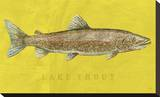 Lake Trout Stretched Canvas Print by John Golden