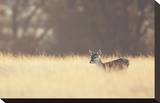 Small One Stretched Canvas Print by Mark Bridger