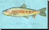 Rainbow Trout Stretched Canvas Print by John Golden