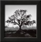 Oak Tree, Sunrise Print by Ansel Adams