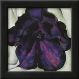 Purple Petunia Poster by Georgia O'Keeffe