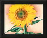A Sunflower from Maggie, 1937 Prints by Georgia O'Keeffe