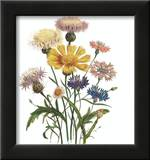 Centaurea Crocadylium Posters by Jane W. Loudon
