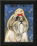 Shih Tzu Prints by John Golden