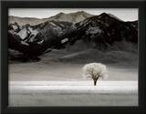 Solitary Tree Prints by Dennis Frates