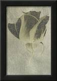 Silver Stem II アート : バーグハート