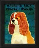 Cavalier King Charles (blenheim) Poster by John Golden