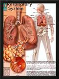 Respiratory System Art