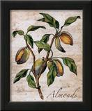 Almonds Prints by Renee Bolmeijer