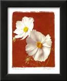 白いコスモスII - ミニ ポスター : エイミー・メリオウス