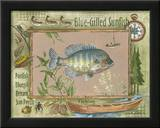 Blue-Gilled Sunfish Poster by Anita Phillips