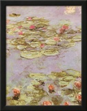 Red Water Lilies Prints by Claude Monet
