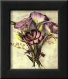 Lisianthus Poster by Rosanne Olson