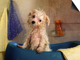 Little Wet Maltese in Bath Tub Art by Henryk T. Kaiser
