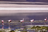 Pink Flamingos in the Salar De Atacama, Chile and Bolivia Photographic Print by Françoise Gaujour