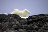Polar Bear in the North Pole Photographic Print by Françoise Gaujour