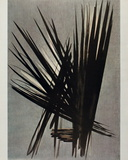 Composition T55-18 Collectable Print by Hans Hartung