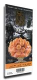 2009 Orange Bowl Mega Ticket - Virginia Tech Hokies Stretched Canvas Print