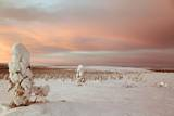 Landscape Covered in Snow, Lapland, Finland Photographic Print by Françoise Gaujour