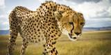 Cheetah on the Safari Vehicle in Maasai Mara, Kenya Photographic Print by Axel Brunst