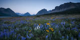 Wildflowers Along the Rocky Mountain Front. Glacier National Park, Montana Photographic Print by Steven Gnam
