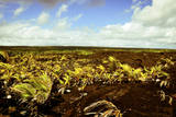 Scenes from around the Big Island of Hawaii Photographic Print by Daniel Kuras