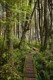West Coast Trail Along the Pacific Northwest Photographic Print by Sergio Ballivian