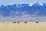 Wild Horses Galloping in Nevada Photographic Print by Sergio Ballivian