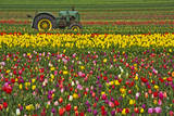 Vintage Tractor Within a Field of Tulips During the Annual Tulip Festival in Woodburn, Oregon Photographic Print by Patricia Davidson