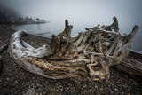 One of Many Trees Washed Up Upon the Shore of Alki Beach, West Seattle, Washington Photographic Print by Dan Holz