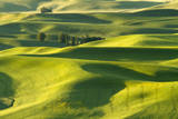Morning Light Casting Shadows on the Velvety Looking Wheat Fields in the Palouse, Washington Photographic Print by Patricia Davidson