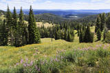 Hills of Yellowstone National Park Photographic Print by Sue Anne Hodges
